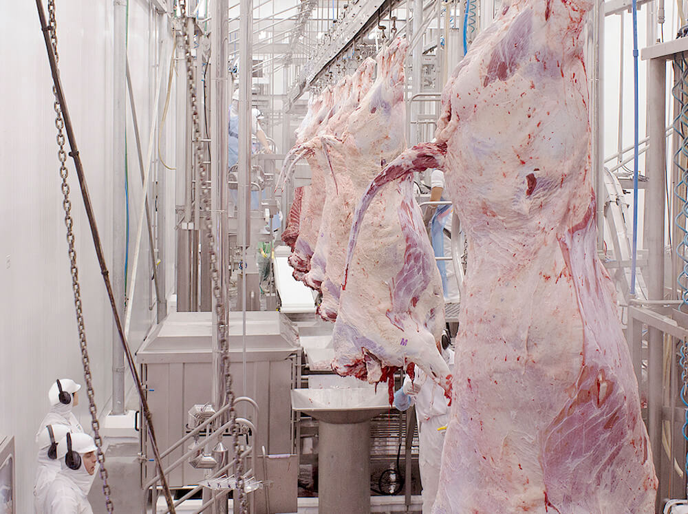 frigorifico-verdi-carnes-pouso-redondo-sc-linha-abate-4