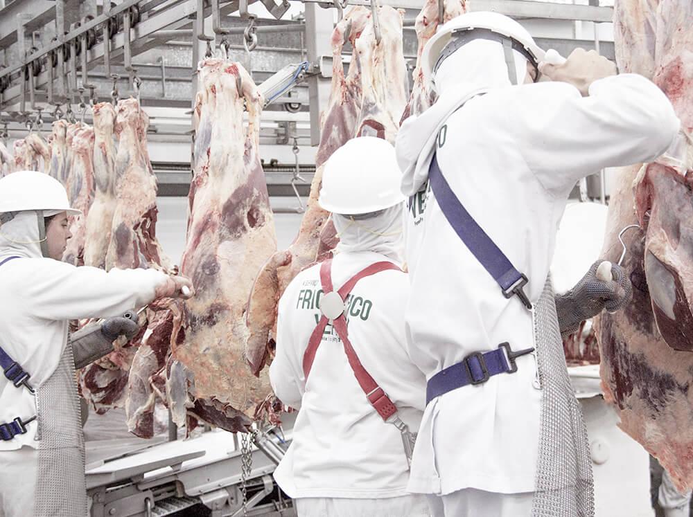 frigorifico-verdi-carnes-pouso-redondo-sc-linha-desossa-area-2