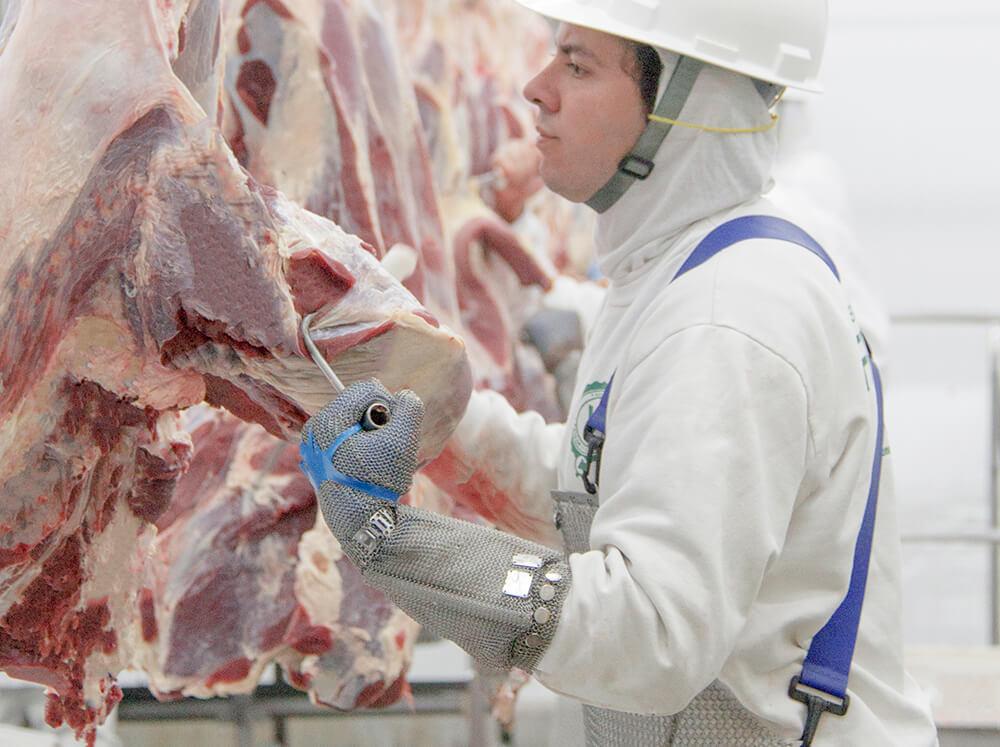 frigorifico-verdi-carnes-pouso-redondo-sc-linha-desossa-area-5