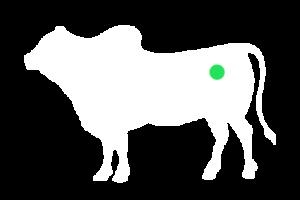 frigorifico-verdi-carnes-pouso-redondo-sc-local-corte-alcatra-completa