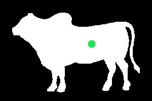 frigorifico-verdi-carnes-pouso-redondo-sc-local-corte-bucho