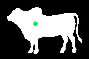 frigorifico-verdi-carnes-pouso-redondo-sc-local-corte-colmeia