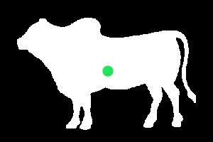 frigorifico-verdi-carnes-pouso-redondo-sc-local-corte-figado-bife