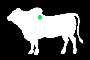 frigorifico-verdi-carnes-pouso-redondo-sc-local-corte-ligamento-cervical