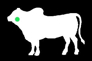 frigorifico-verdi-carnes-pouso-redondo-sc-local-corte-lingua