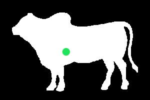 frigorifico-verdi-carnes-pouso-redondo-sc-local-corte-membrana-do-diafragma