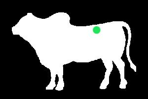frigorifico-verdi-carnes-pouso-redondo-sc-local-corte-verdi-chuleta-simples-serrada
