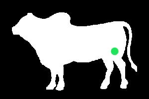 frigorifico-verdi-carnes-pouso-redondo-sc-local-corte-verdi-coxa-com-alcatra
